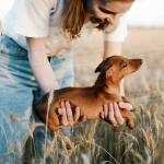Woman Holding Dachshund Puppy Outdoor Stock Photo Dissolve