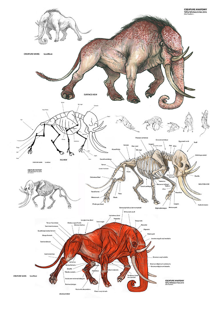 Glen Southern Creature Anatomy