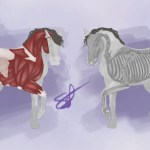 Artstation Horse Anatomy Study Elisabeth Mosquera Murillo