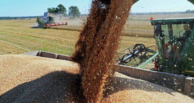 Colheita de trigo na região de Kaliningrado, na Rússia