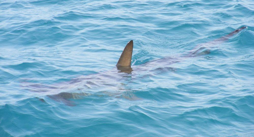 En pleine baignade dans le Var, elle découvre un requin mort en bord de plage