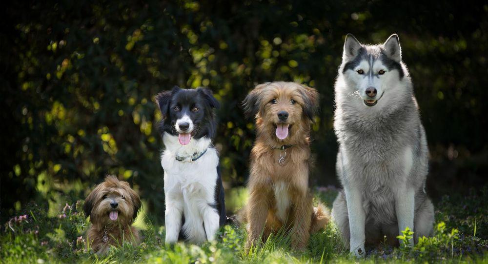Des centaines de chiens risquent de mourir de faim au Maroc à cause du confinement, un appel aux dons lancé - photos