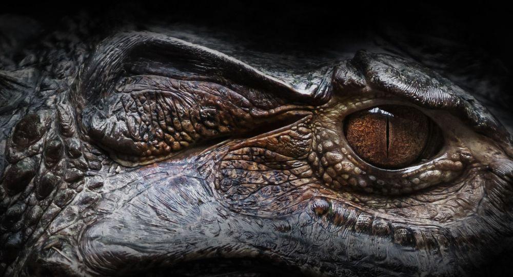 La provenance de cette créature semblable à un alligator intrigue les chercheurs - photos