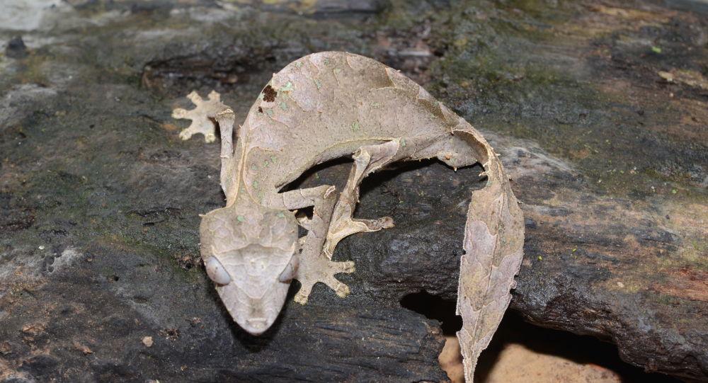 Le camouflage de ce gecko surprend les internautes et fait le buzz - photo