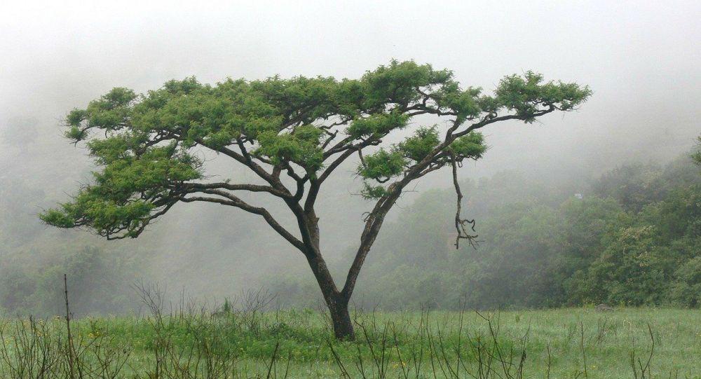La «sensibilité» des plantes décryptée par un biologiste