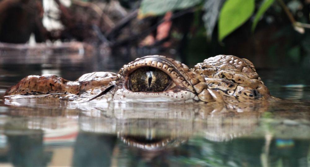Un crocodile entraîne dans les profondeurs un jeune effectuant un rituel hindouiste et le tue