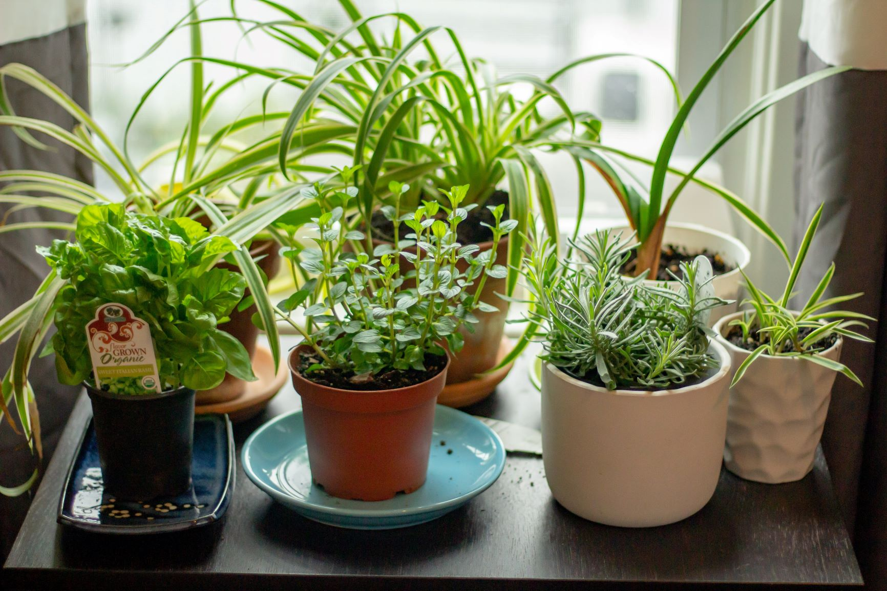 The Plant Killer S Guide To Indoor Herb Gardens