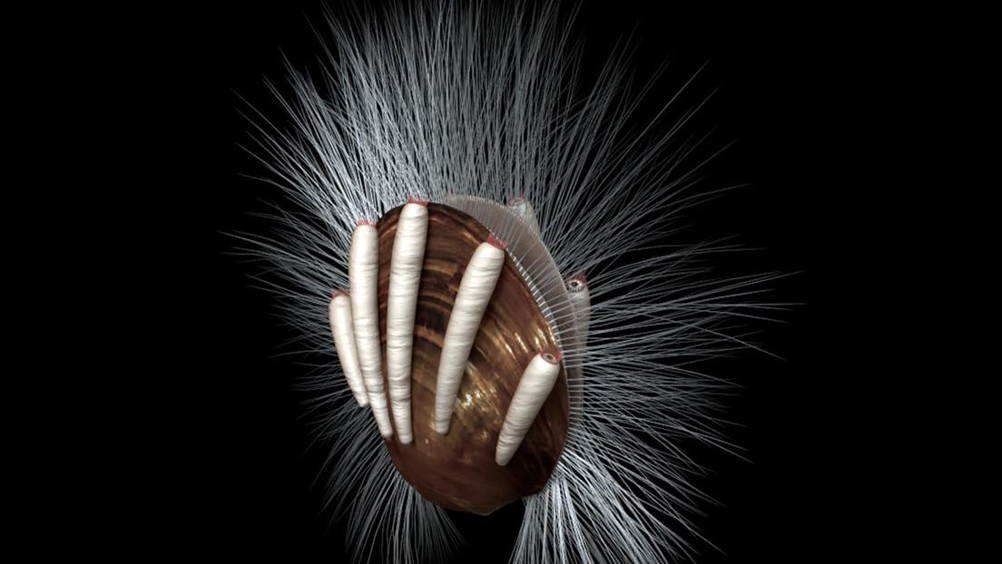 Descubren en China el parásito animal más antiguo: un 'gusano' de hace 512 millones de años