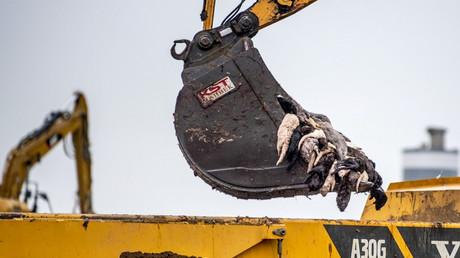 Dänemark: Millionen wegen Corona geschlachteter Nerze sollen wieder ausgegraben werden