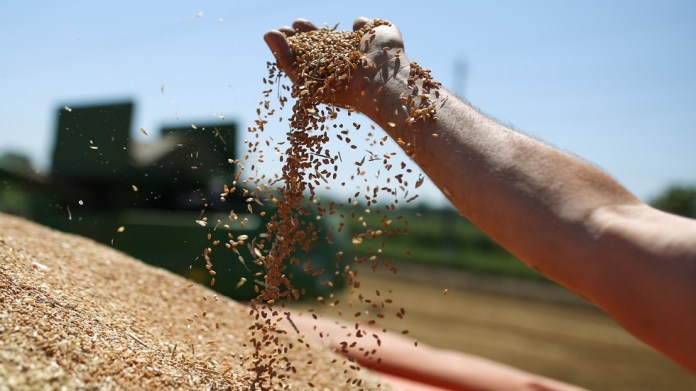 Russian wheat exports surge nearly 11% despite export curbs