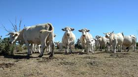 EU agri ministers approve major CAP reform farming subsidies deal in bid to better protect small producers and environment