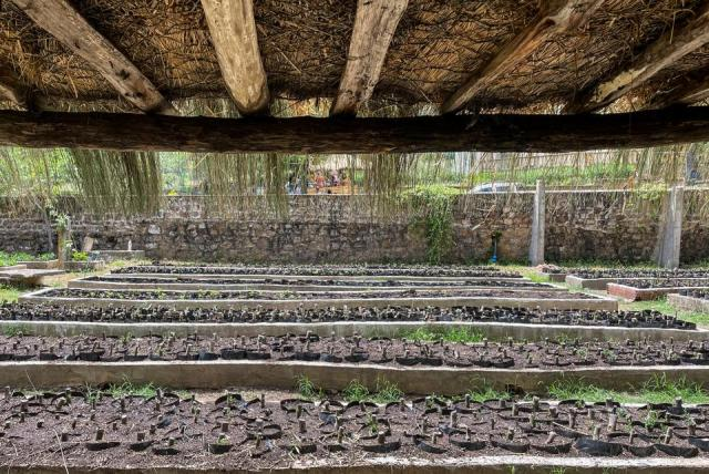 Taboui has created an educational and communitarian garden led by local residents, mainly women and youth, where they reintroduce local plant species that have been replaced by imported hybrid seeds.