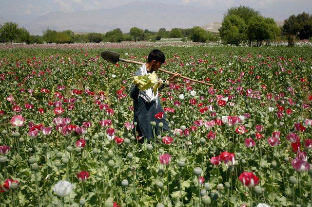 """Shitja e opiumit dhe trafikimi i heroinës, """"zbulohet"""" pasuria"""