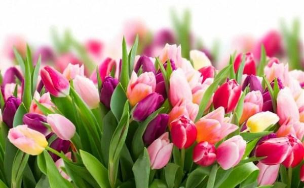 В преддверии 8 Марта цветы из Тульской области будут ...