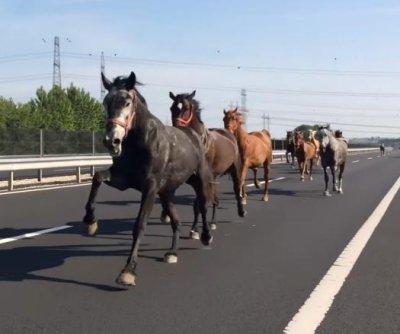 https://i1.wp.com/cdnph.upi.com/ph/st/th/4161495828936/2017/i/14958292339531/v1.2/Horses-stampede-in-wrong-direction-on-Hungarian-highway.jpg