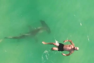 WATCH: Hammerhead shark circles oblivious swimmer in Florida