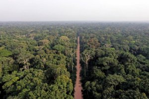 Rainforests of central Africa unequally sensitive to climate change, human development