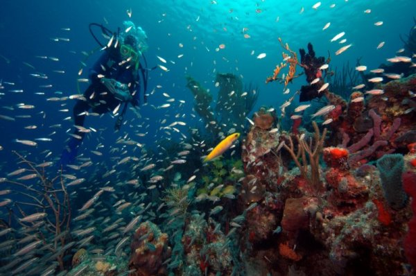 Study: UV-filtering sunscreen compound killing coral - UPI.com