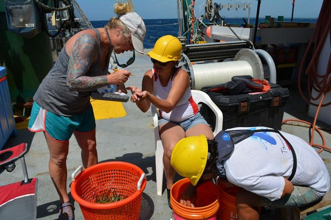 Researcher Erin Pulster, marine scientist at the University of South Florida, is pictured identifying fish specimens alongside research partners from the National Autonomous University of Mexico