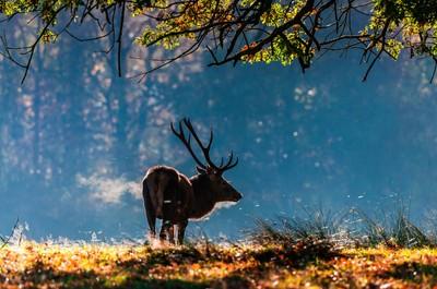 Deer Breath by theoherbots