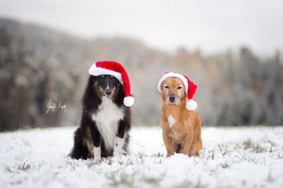 Zelda and Toby are SO ready for Christmas! by theoherbots