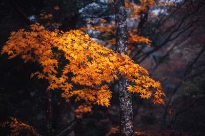 Fall foliage in Japan by theoherbots