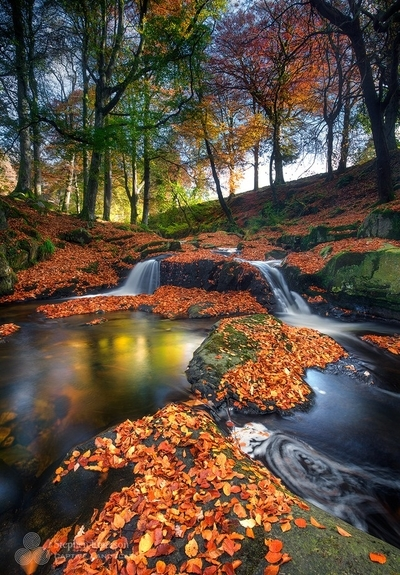 Cloughleagh forest, Co Wicklow in beautiful Autumn colour.  by theoherbots