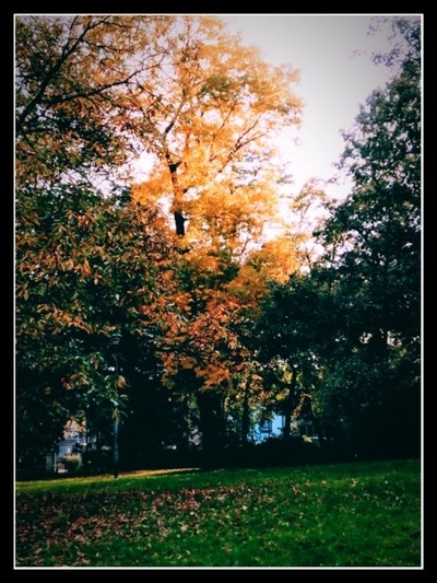 Autumn 2019 Stadspark Tienen Belgium Photo 8 How beautiful autumn can be by theoherbots
