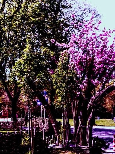 My spring walk 12-04-2020 My walk along in Tienen Belgium Sincerely Theo-Herbots-Photography https:--groetenuittienen.blog- by theoherbots
