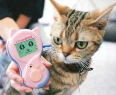 Meowlingual understands cats better