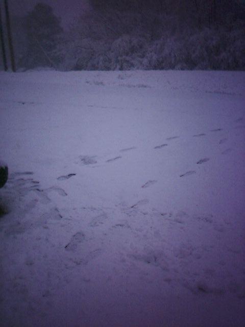 Snow in Alabama #1