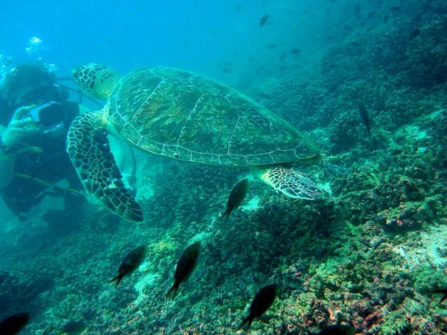 Schildpad en Engelien