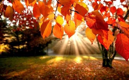 autunno1-1024x640