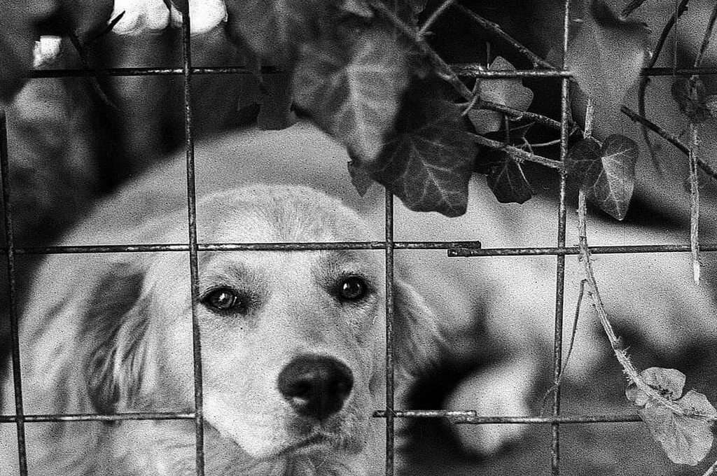 photo of a dog looking through a fence