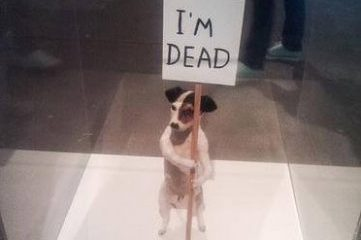 "photo of small dog holding sign that says ""I'm dead"""