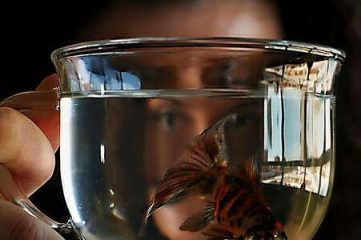 photo of man holding clear mug with fish swimming inside