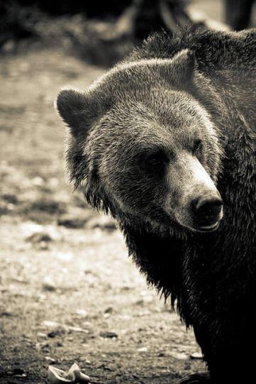 photo of a bear