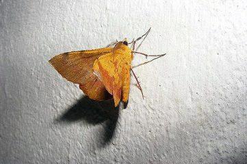 photo of moth