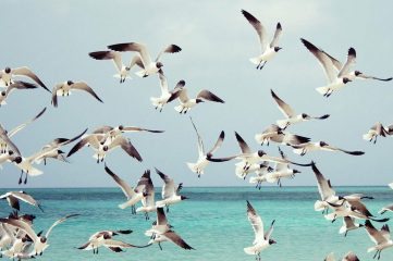 photo of seagulls
