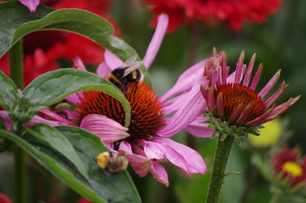 photo of community garden flowers