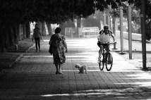 Perros y ruedas