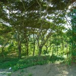 Lot for Sale in Cebu City Philippines