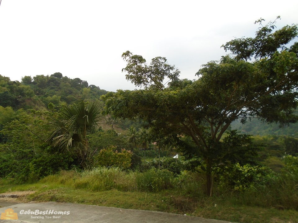 overlooking lot for sale in cebu city