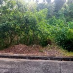 Lot for Sale in Consolacion Cebu 2020