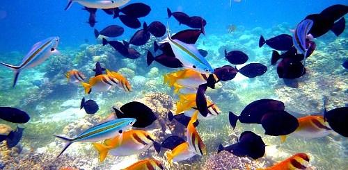 5 Quick Island Getaways in Cebu | Cebu Finest