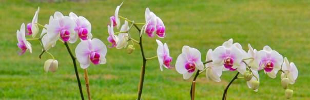 Orchids 3-18-12 (5)
