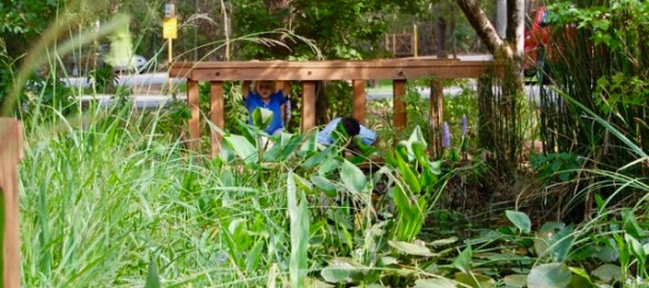 Two kids looking for frogs and dragonfly larva in a lily pond at Jesse H Jones Park.
