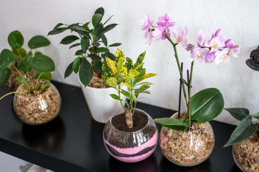 bobylaplante-2web