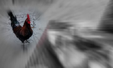 galinhaexercicio