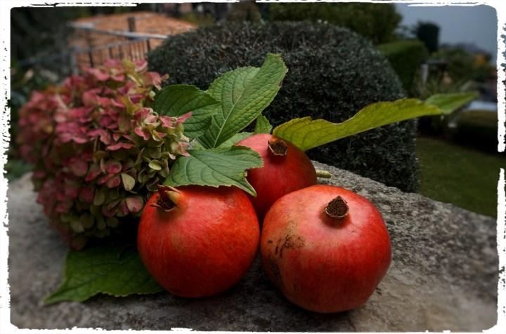 granatäpple hortensia